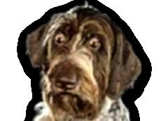 Sticker chien blase perplexe circonspect doute choquer shock risitas deprimer deprime triste ok cool osef tagueule tg btg
