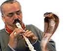 Sticker serpent risitas pipo menteur flute cobra vipere