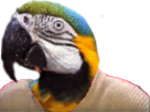Sticker perroquet risitas wtf