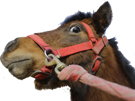 Sticker other poney poney viole poney viole par un syrien