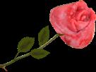 Sticker other rose anal fleur anus bud sfu