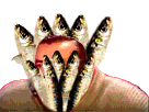 Sticker risitas bizarre sardine cache poisson issou