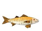 Sticker jvc truite saumon arcenciel poisson thon mer