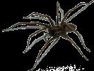 Sticker other araignee spider bestiole peur screamer effroi fake