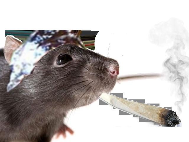 Sticker other rat lsd complot aluminium spliff bedo drogue join weed shit
