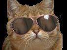 Sticker risitas chat jesus jesus chat lunettes chat lunettes chat lunettes