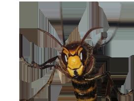 Sticker other frelon deter menacant insecte venere insecte